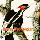 Downy Woodpecker and Other Bird Songs