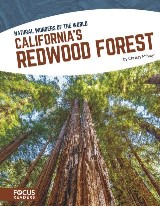 California's Redwood Forest
