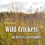 Wild Crickets in Breezy Grasslands