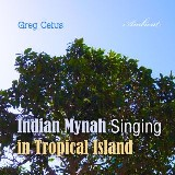 Indian Mynah Singing in Tropical Island